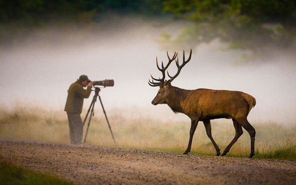 Oblivious to the world. Even as the photographer peers into his viewfinder looking for wildlife,  a huge stag passes him by. Picture: Hans Kruse / London Media