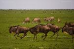 Serengeti : Africa's  Endless Plains