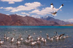 Pangong Tso Lake. The Magnate of  Bollywood Tourists