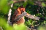Wild In Borneo